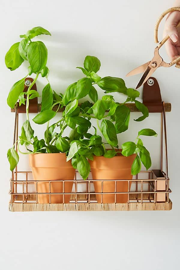 herb basket and scissors with herb pots