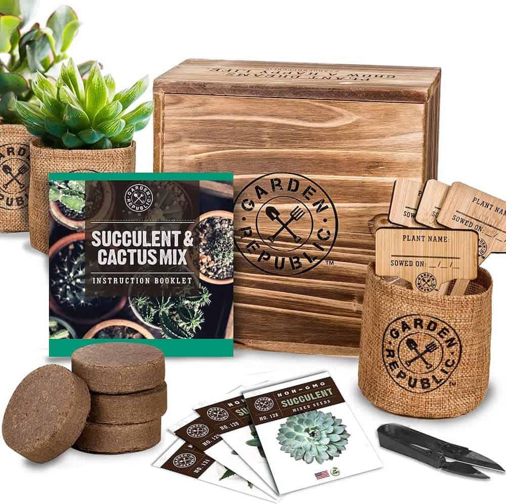 Cactus Succulent Seed Starter Kit - Secret Santa Gift