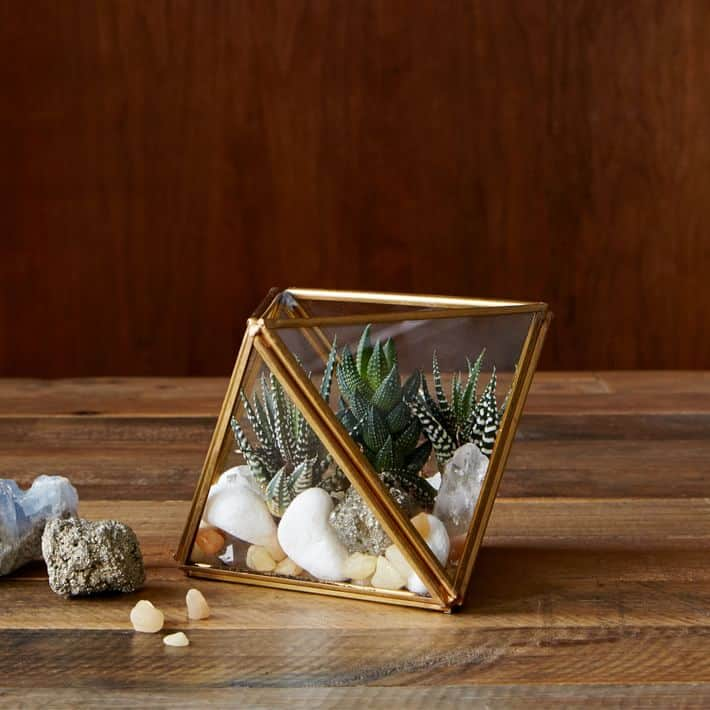 mothers day gift specials: glass and metal faceted terrariums