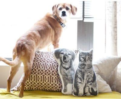 pet pillow - cute cat stuff