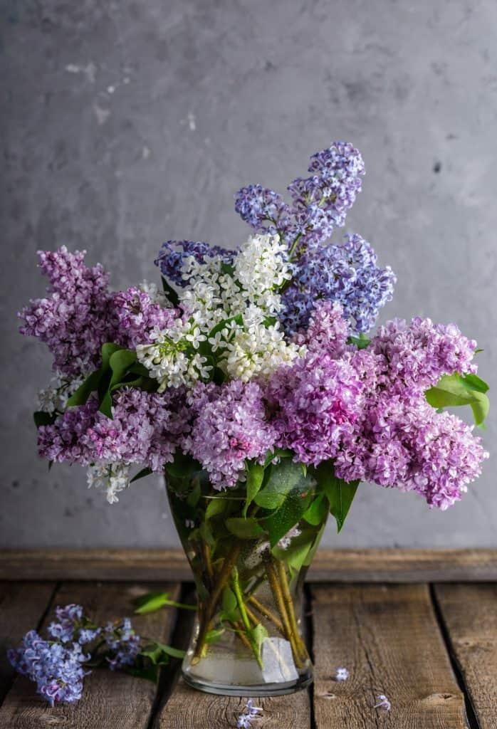8th anniversary flower: lilacs