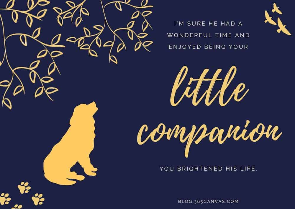 a Sympathy Message For The Loss Of Pet