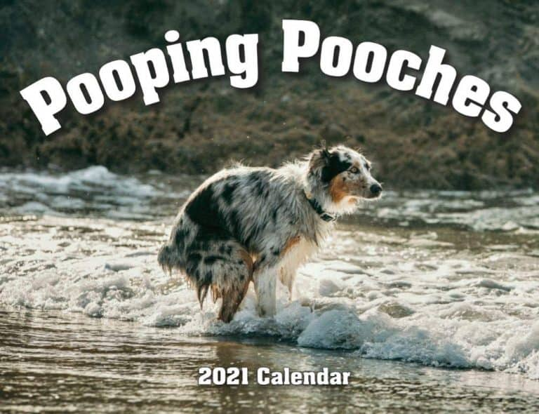 funny gifts for dog lovers: pooping pooches calendar
