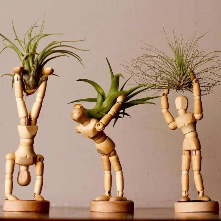 yoga plant pots for stress relief