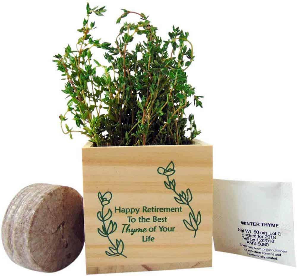 A Plant Pot for retiring teachers