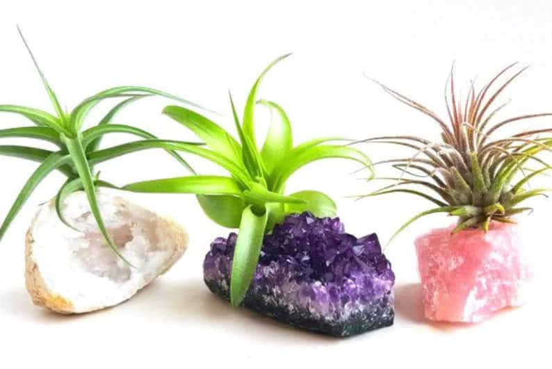 creative stocking stuffer for women: crystal air plants