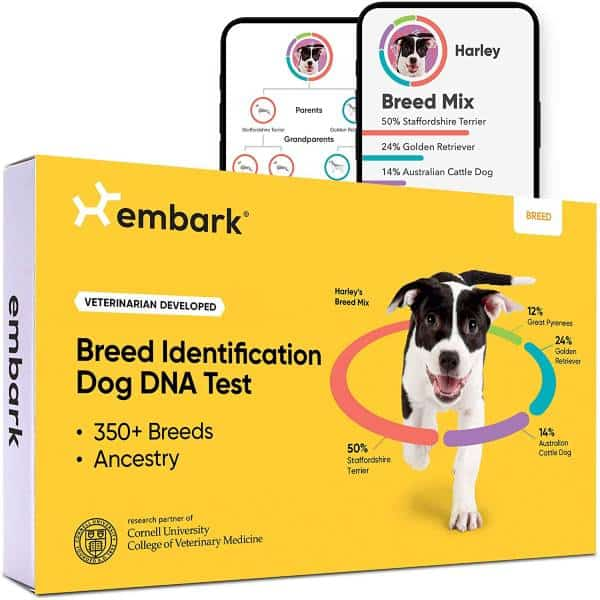 Dog DNA Test Last Minute Christmas Gifts