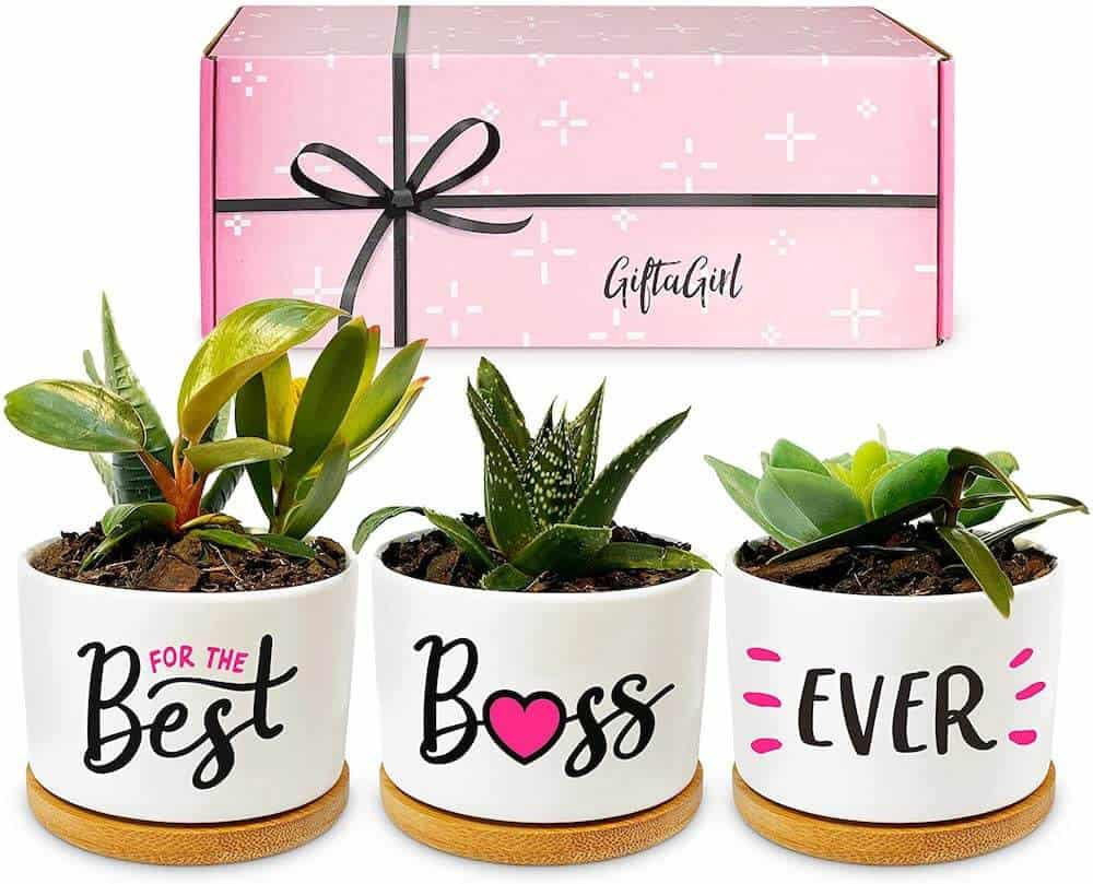 succulent pots - bosses day or christmas gift idea for female bosses